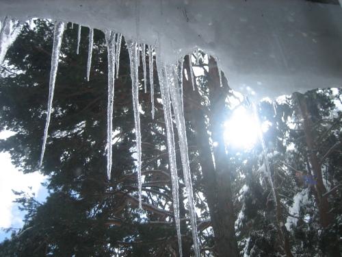 nieve-gatos-y-tor_7-2-09-0883